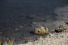 Ufer des Sees stockbild