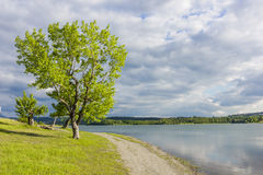 Ufer des Sees mit Bäumen und Himmel stockbild