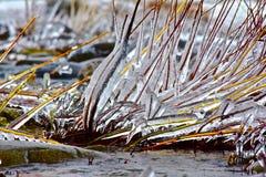 Ufer-Eis und Zweige Lizenzfreies Stockbild