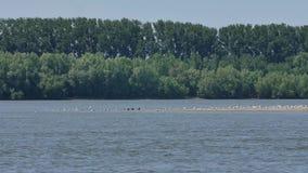Ufer gesehen vom Boot stock footage