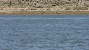 Ufer gesehen vom Boot stock video