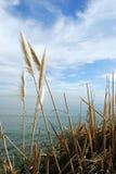 Ufer und Wellen Lizenzfreie Stockbilder