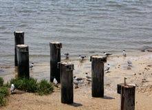 Ufer-Vögel Stockbild
