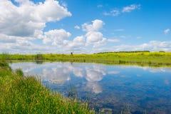 Ufer von einem See im Sumpfgebiet im Sommer stockbild