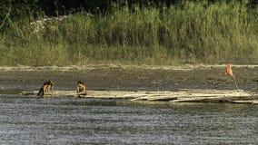 Ufer von Fluss Lizenzfreie Stockfotografie