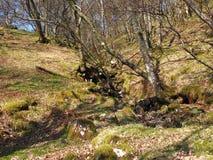 Ufer von Loch Lomond Stockfotografie