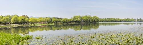 Uferpfirsichblüte und grüner Baum Lizenzfreie Stockfotografie