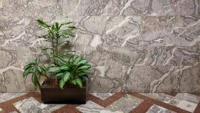Ufficio della pianta Fotografie Stock