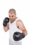 Ufnego boksera spełniania bokserska postawa obraz stock