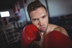 Ufnego boksera spełniania bokserska postawa obrazy stock