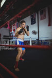 Ufnego boksera spełniania bokserska postawa zdjęcie stock