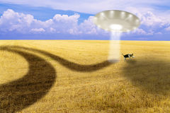 Ufo. Try to capture a dog Stock Photo