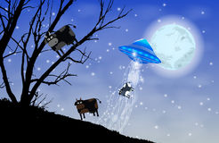 UFO abducts cows silhouette. Cow on the tree Stock Photography