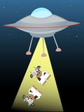 UFO, das herauf zwei Kühe im Lichtstrahl strahlt Stockfotografie