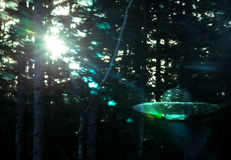 UFO  in Forest Stock Photo