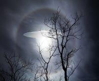 UFO mit Bäumen Stockbild