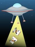 UFO que emite encima de dos vacas en el haz de luz Fotografía de archivo