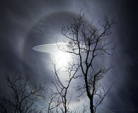 UFO with Trees Stock Image