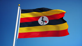 Uganda flag in slow motion seamlessly looped with alpha stock video footage