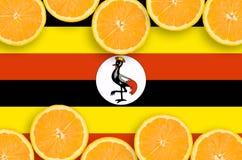 Uganda flagga i citrusfruktskivahorisontalram royaltyfri bild