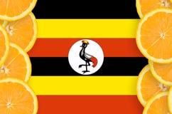 Uganda flagga i vertikal ram för citrusfruktskivor arkivbild