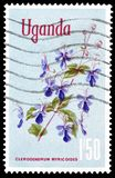 Uganda on postage stamps. Cancelled postage stamp printed by Uganda, that shows butterfly bush, circa 1977 royalty free stock images