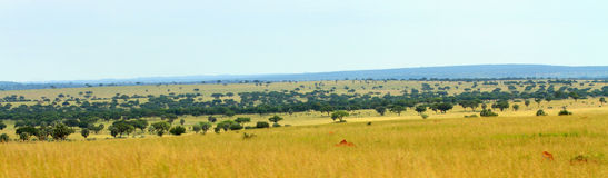Uganda Savannah Panorama Stockfoto