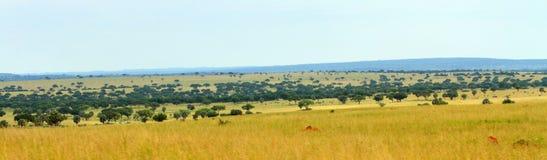 Uganda Savannah Panorama. The Ugandan savannah in Murchison Falls National Park as a panoramic photo stock photo