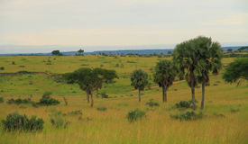 Ugandan Countryside Landscape. A view into the landscape of one of Uganda's Parks, Murchison Falls Royalty Free Stock Photos