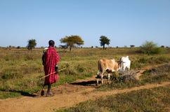Ugandan karamojongherder stock foto's
