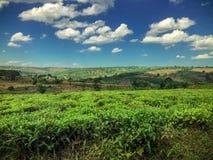 A ugandan landscape royalty free stock images