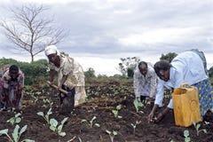 Ugandanfrauen, die Gemüseanlagen pflanzen Lizenzfreies Stockbild