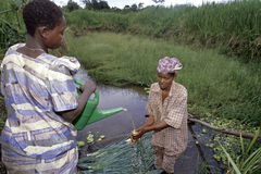 Ugandanfrauen, die Porrees im Gartenbau säubern stockfotografie