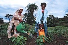 Ugandanfrauenarbeit in der Gemüseproduktion Lizenzfreie Stockfotos