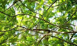 Uggla på trädet Royaltyfri Bild