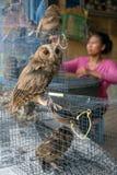 Uggla som är till salu i Pasar Ngasem fågelmarknad i Yogyakrta, Indonesien Fotografering för Bildbyråer