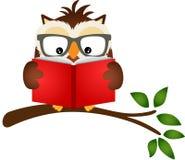 Uggla som läser en bok på trädfilial Arkivbilder