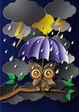 Uggla som rymmer ett paraply i regnet Arkivfoton