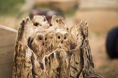 Ugglafågel Royaltyfria Bilder