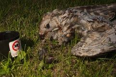 Ugglan som förbi förgiftas, tjaller gift Gulbrun uggla, Strixaluco royaltyfria bilder