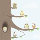 Ugglor på ett träd Arkivfoto