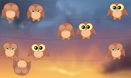 Ugglor som sitter på kraftledningar mot stormig himmel Royaltyfria Foton
