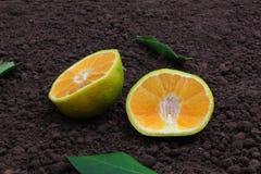 Ugli fruit Stock Photography