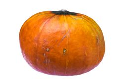 Ugly autumn pumpkin isolated on white background royalty free stock photo