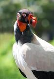 Ugly Bird Royalty Free Stock Image