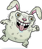 Ugly Bunny Running Royalty Free Stock Photography