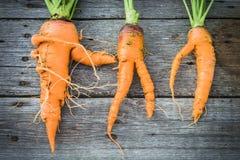 Ugly carrot on barn wood Stock Photo