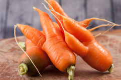 Ugly carrots, fresh produce. Farm fresh ugly carrots bent and twisted Royalty Free Stock Image