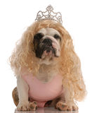 Ugly dog dressed as a princess Stock Images