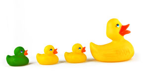 Ugly Duckling Stock Photography